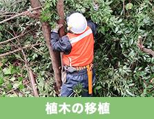 植木の移植