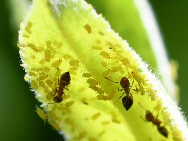 すす病とは?植物をダメにする病…害虫駆除から予防策まで徹底解説!