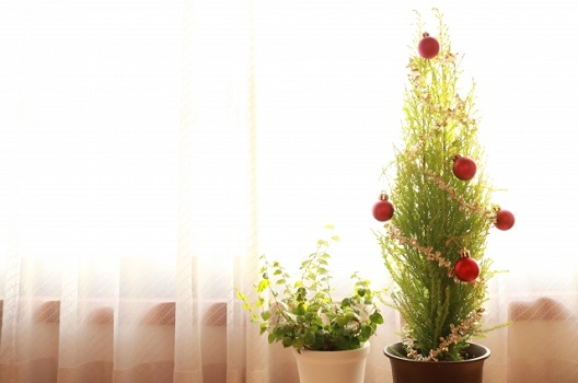 鉢植えにすることで木の高さを抑えられる