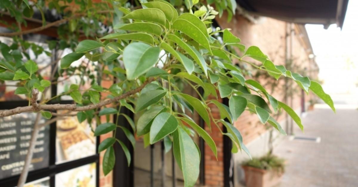 庭木を消毒して虫や病気から守ろう!時期や手順、薬剤の選び方を解説