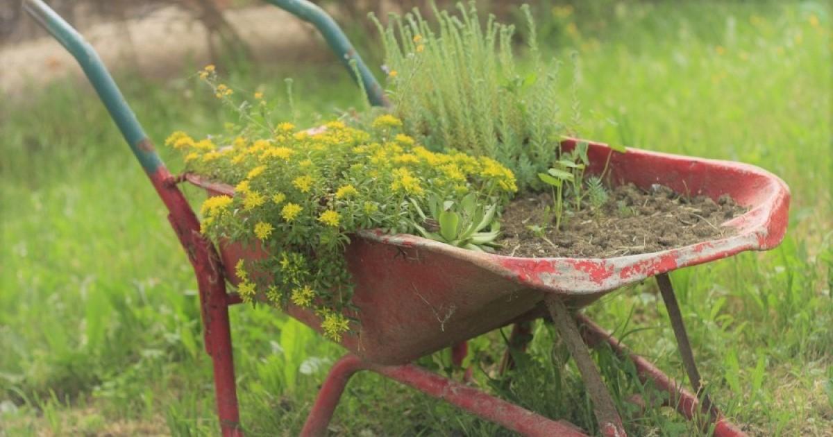 庭の手入れを楽にするコツ【便利道具・簡単DIY】をお教えします!