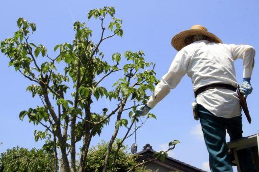 腐葉土の作り方は意外と簡単?腐葉土作りに使える植物や堆肥との違い