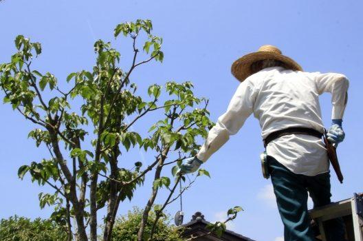 庭木を虫から守ることができる