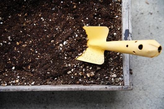 まずは植えてみよう