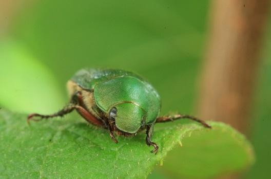 1.病害虫対策をおこなう