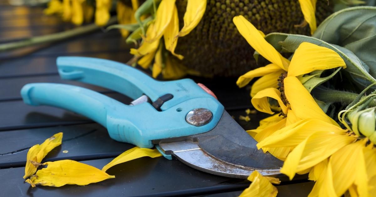 剪定ばさみの選び方|使いやすい道具選びは剪定上手さんへの第一歩