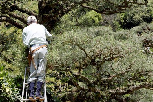 庭木を剪定する目的
