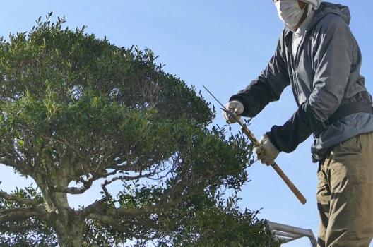 剪定とは:木の形を整えて成長と健康を保つお手入れ