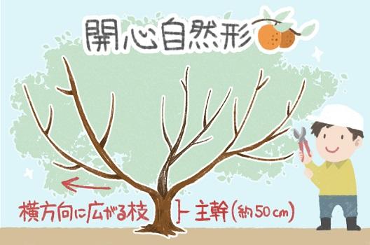 2.5年目以上の成木