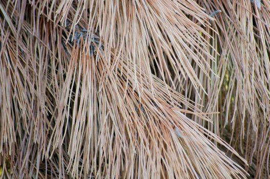 松の育て方を徹底解説!正しいお手入れ方法を知って立派な木にしよう