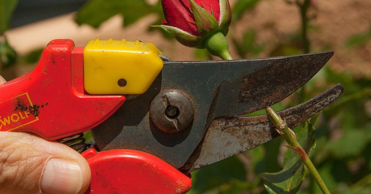 庭木の剪定をプロにまかせる!プロ集団があなたの庭をお助けします!