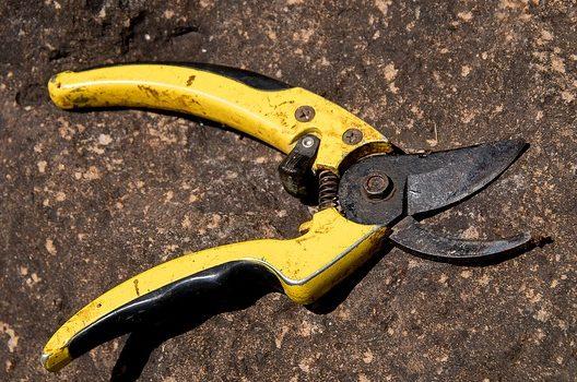 パキラ剪定の時期と方法を紹介!パキラは挿し木で増やすこともできる