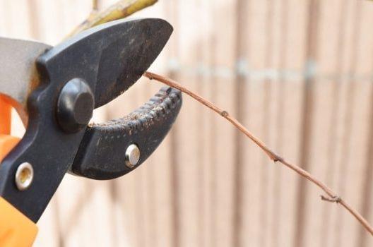 南高梅剪定の方法と伸びたまま放置するリスク