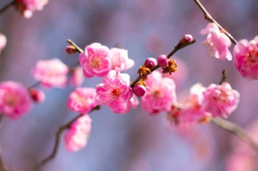 花を付ける芽と葉を付ける芽の違い