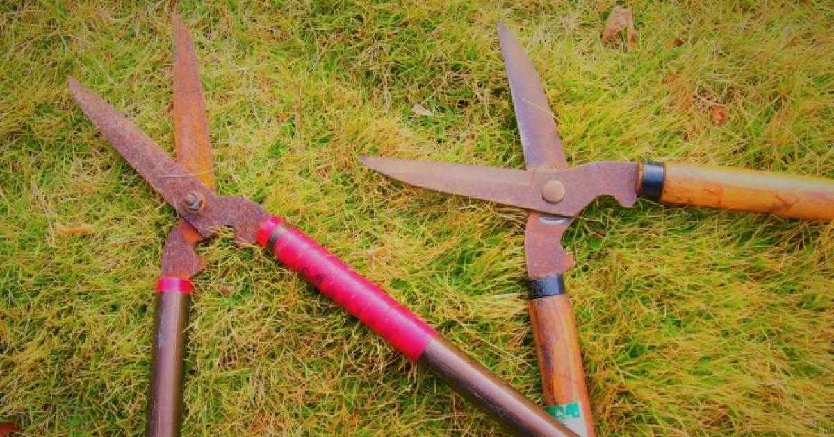 ウラジロガシの剪定は必須!お手入れ~枝葉の利用法まで総まとめ