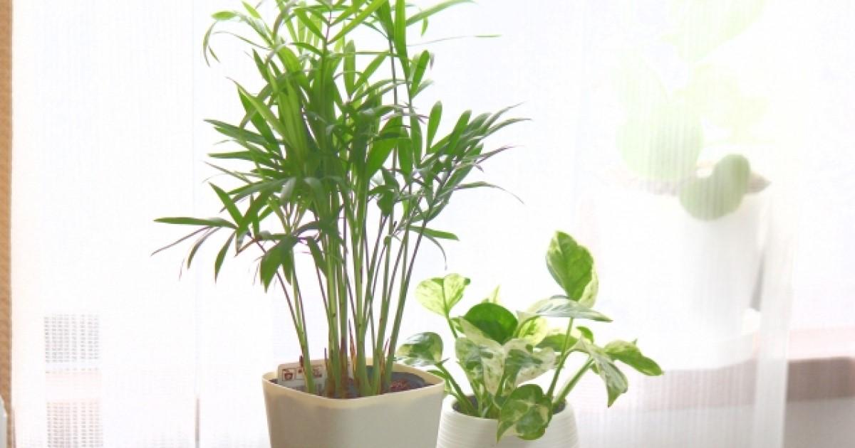 観葉植物の剪定方法を解説!知っておきたいポイント・剪定後のケア
