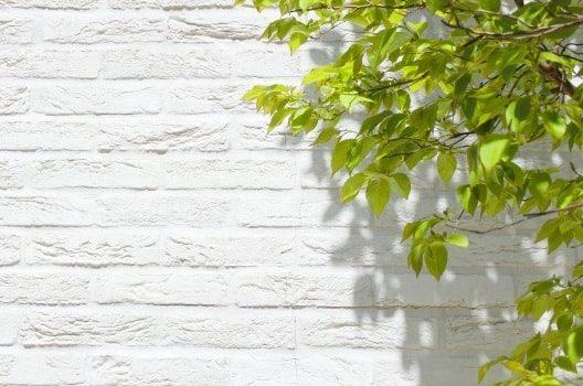 ハゴロモジャスミンの育て方・お手入れ法