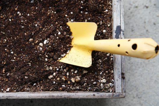 ボトルツリーの植え替えは、なぜ必要なのか?