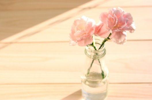 カーネーションの花の楽しみ方