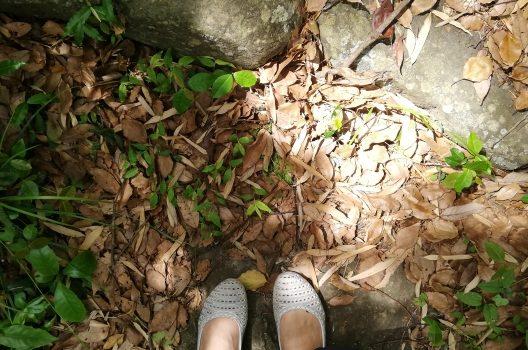 ラカンマキを育てる環境