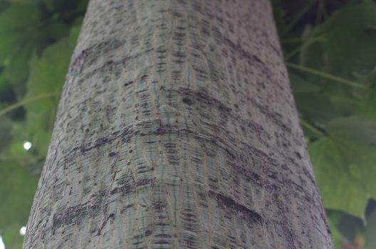 樹高によっては慣れていないと危険!