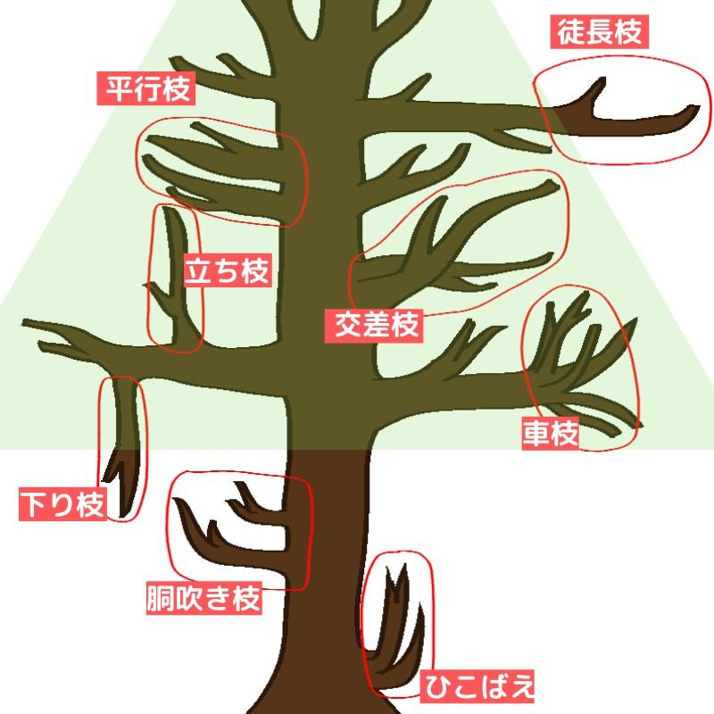 不要枝の種類