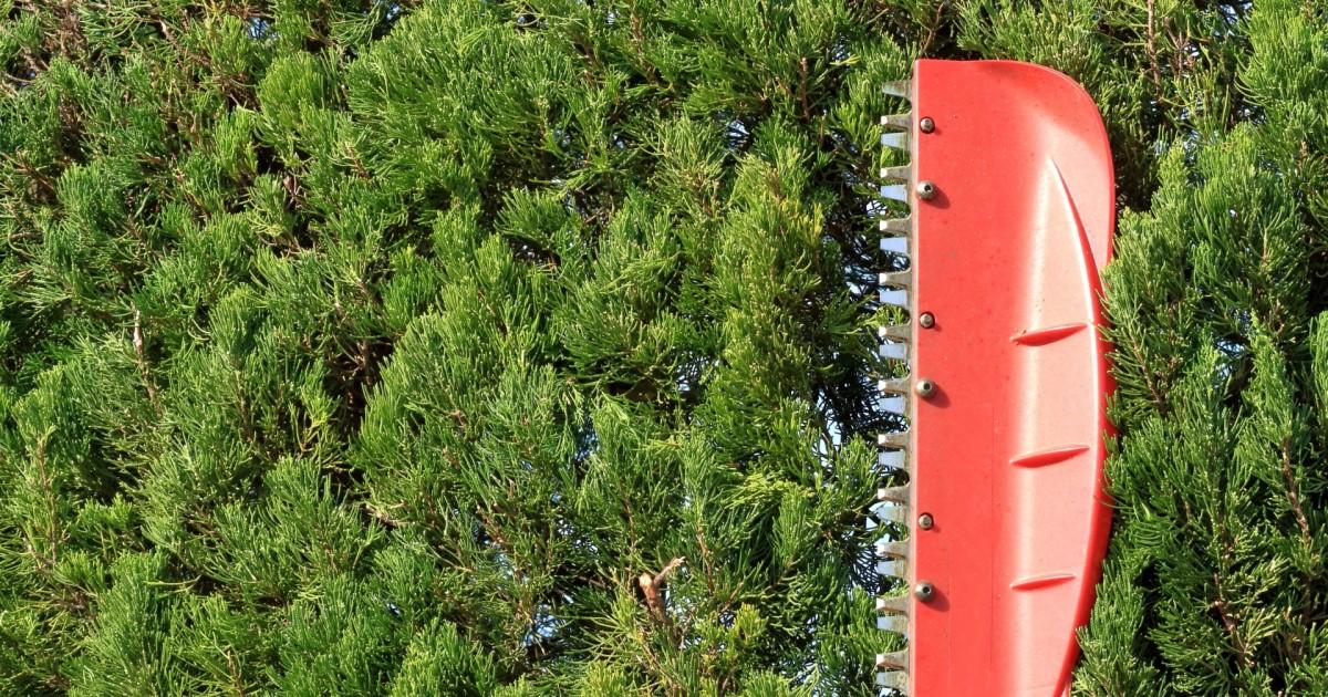 剪定はいつおこなえばよい?庭木の剪定時期や方法について解説!