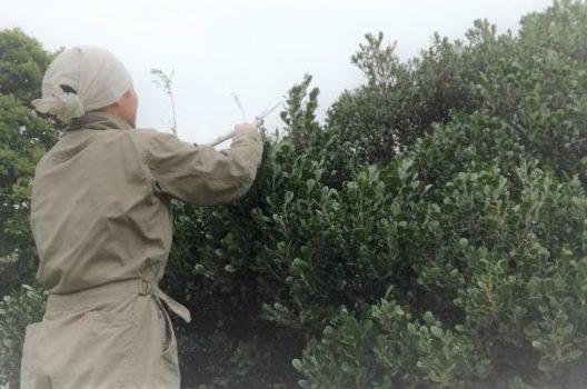 庭木の剪定は重要な作業!剪定の必要性・方法・時期などをご紹介