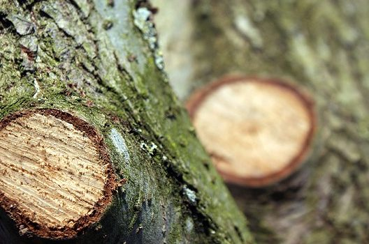 枝葉の剪定は樹木に負担がかかる作業
